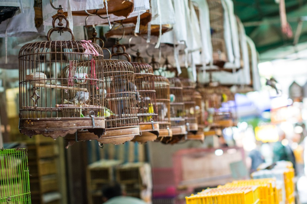 The Bird Market in Kowloon is an iconic Hong Kong sight.
